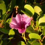 Colorful Flowers & Plants