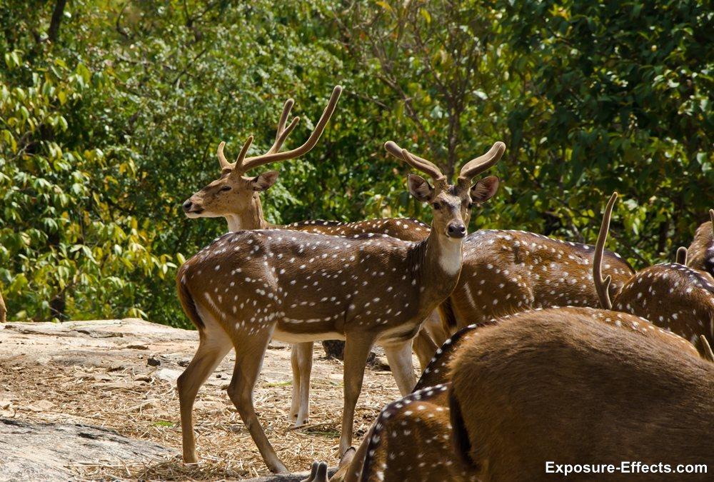 Bannerghatta bangalore jungle lodges and resorts-14