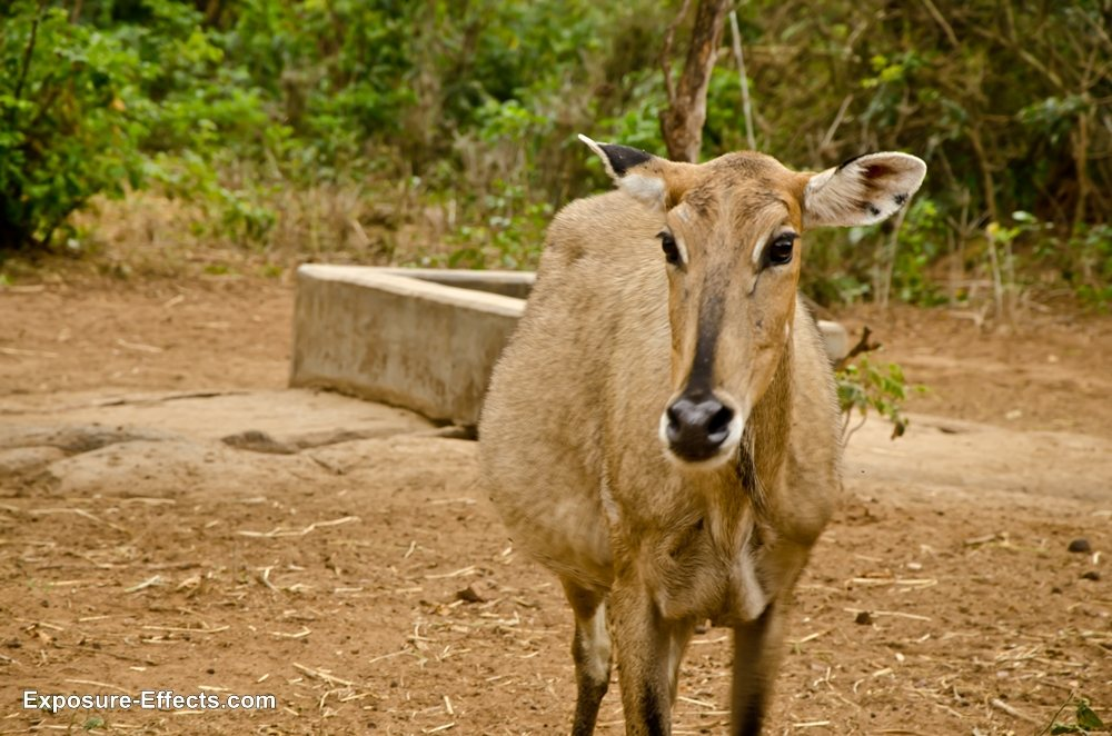 Bannerghatta bangalore jungle lodges and resorts-32