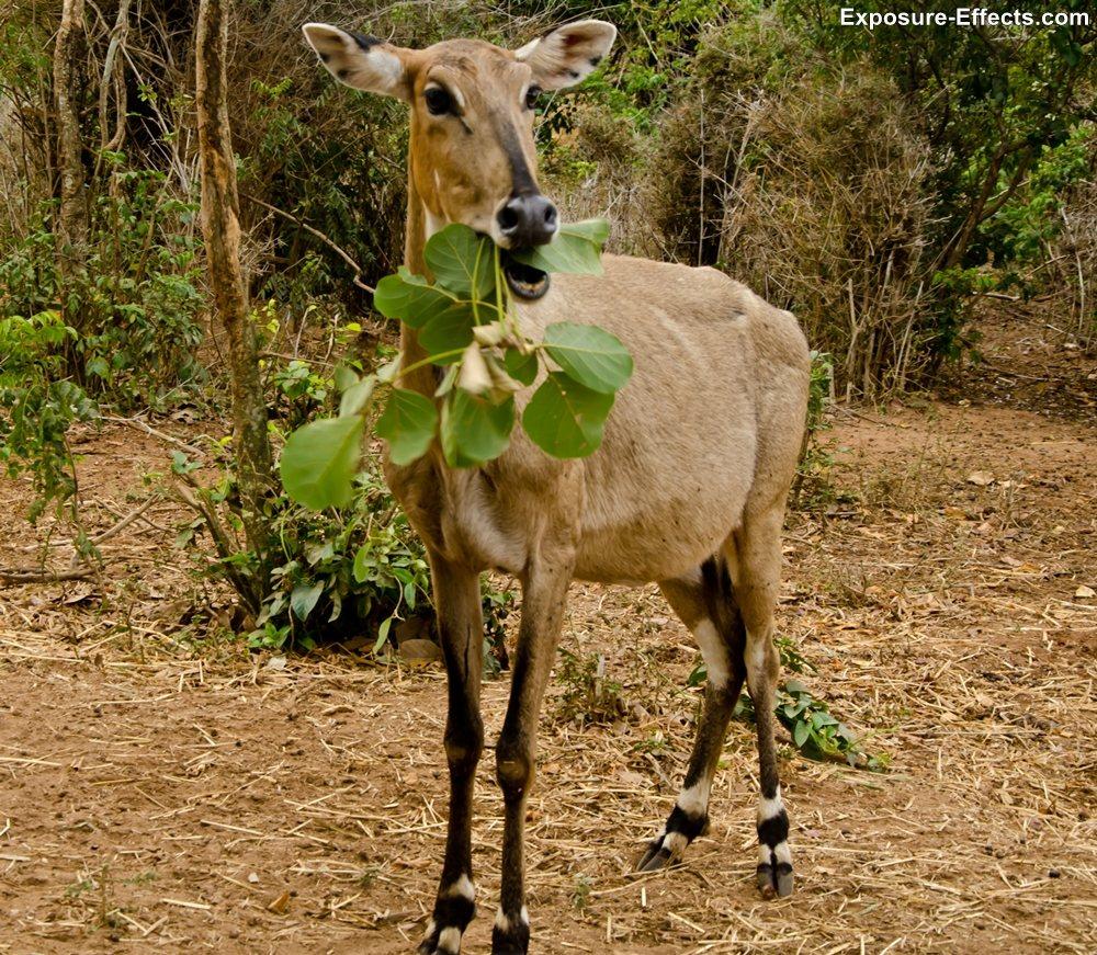 Bannerghatta bangalore jungle lodges and resorts-33