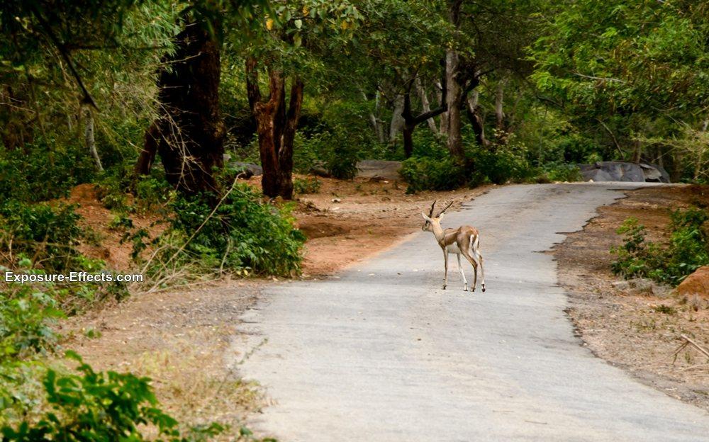 Bannerghatta bangalore jungle lodges and resorts-38