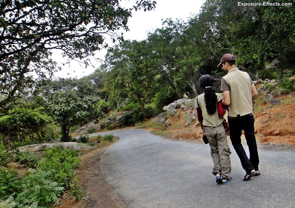 Bannerghatta bangalore jungle lodges and resorts-39