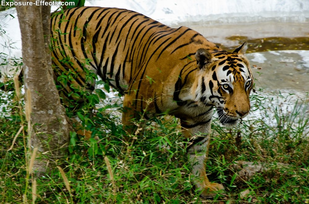 Bannerghatta bangalore jungle lodges and resorts-53