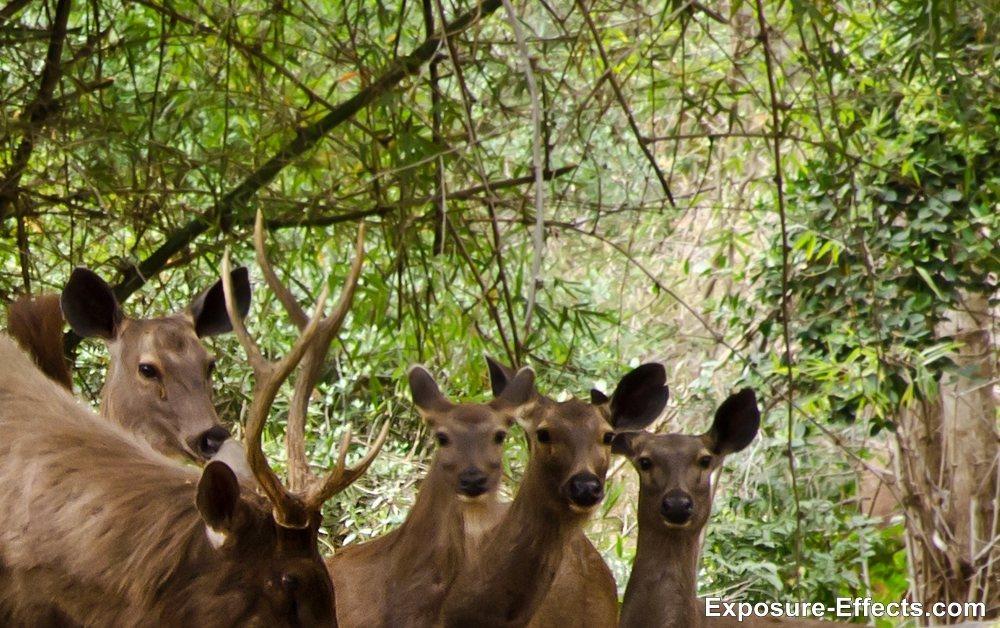Bannerghatta bangalore jungle lodges and resorts-58