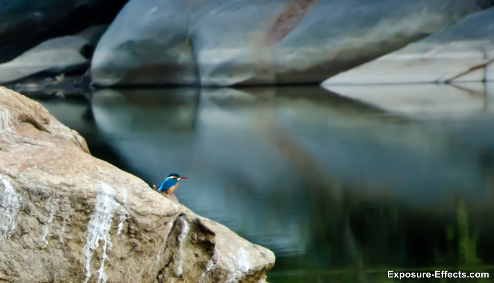 Bannerghatta bangalore jungle lodges and resorts-72-kingfisher bird