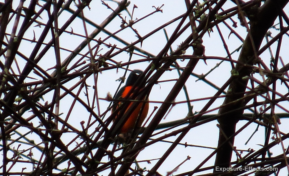 Birds Dubare Forest