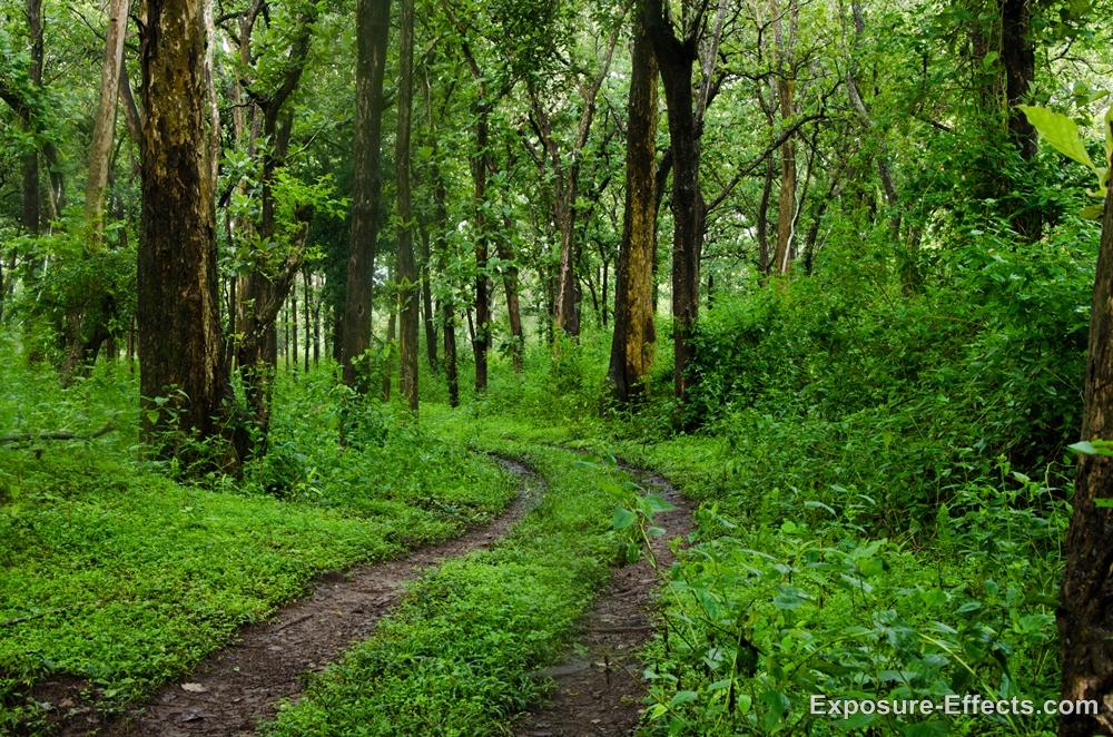 Dubare Elephant camp jungle lodges and resorts karnataka