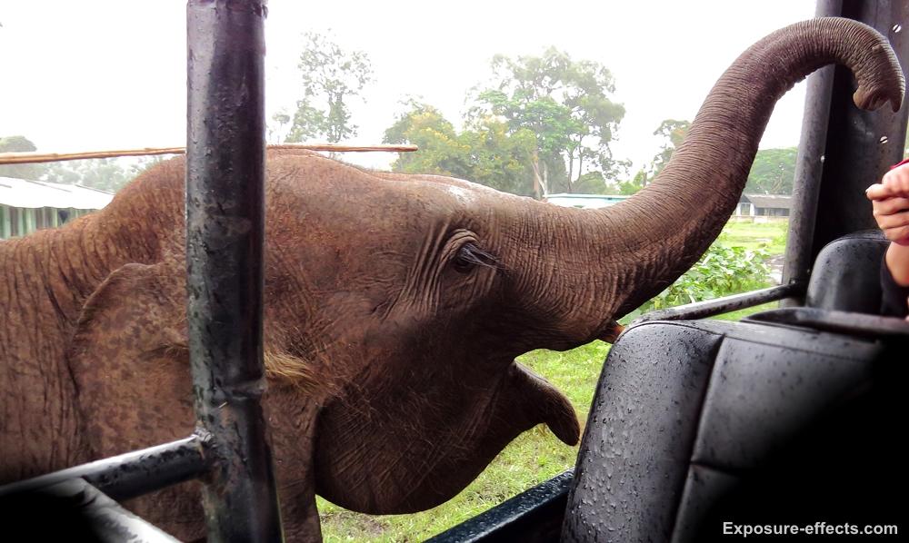 Elephant at Jungle Lodges and Resorts Dubare Elephant Camp