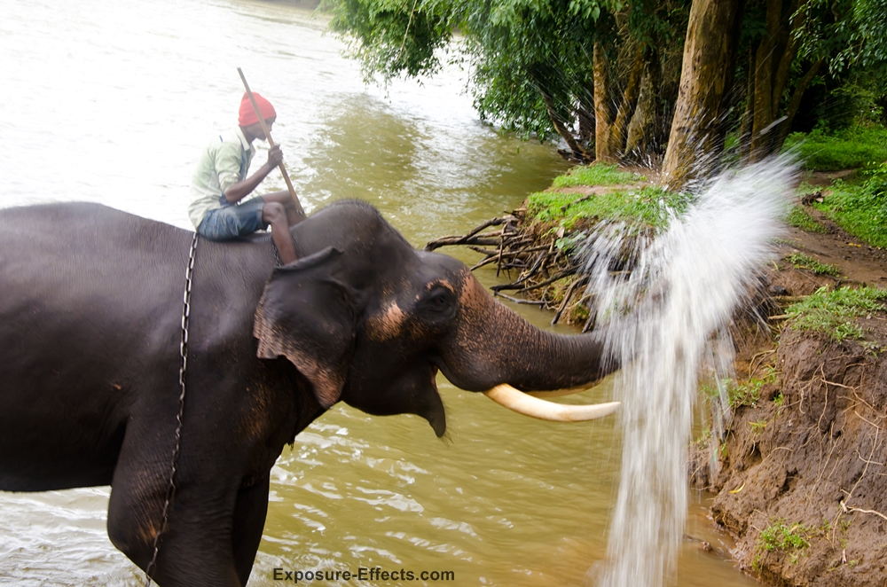 Elephant pouring water on guests at Dubare Elephant Camp Jungle lodges and resorts