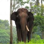 Dubare Elephant Camp – Jungle Lodges and Resorts