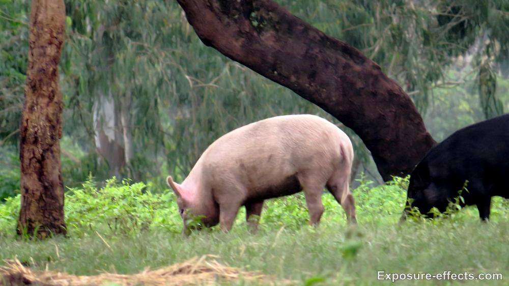 Wildlife at Dubare Elephant Camp Jungle Lodges and Resorts
