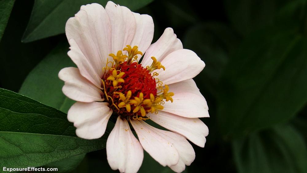 Flowers at Lalbagh Botanical Garden Bangalore