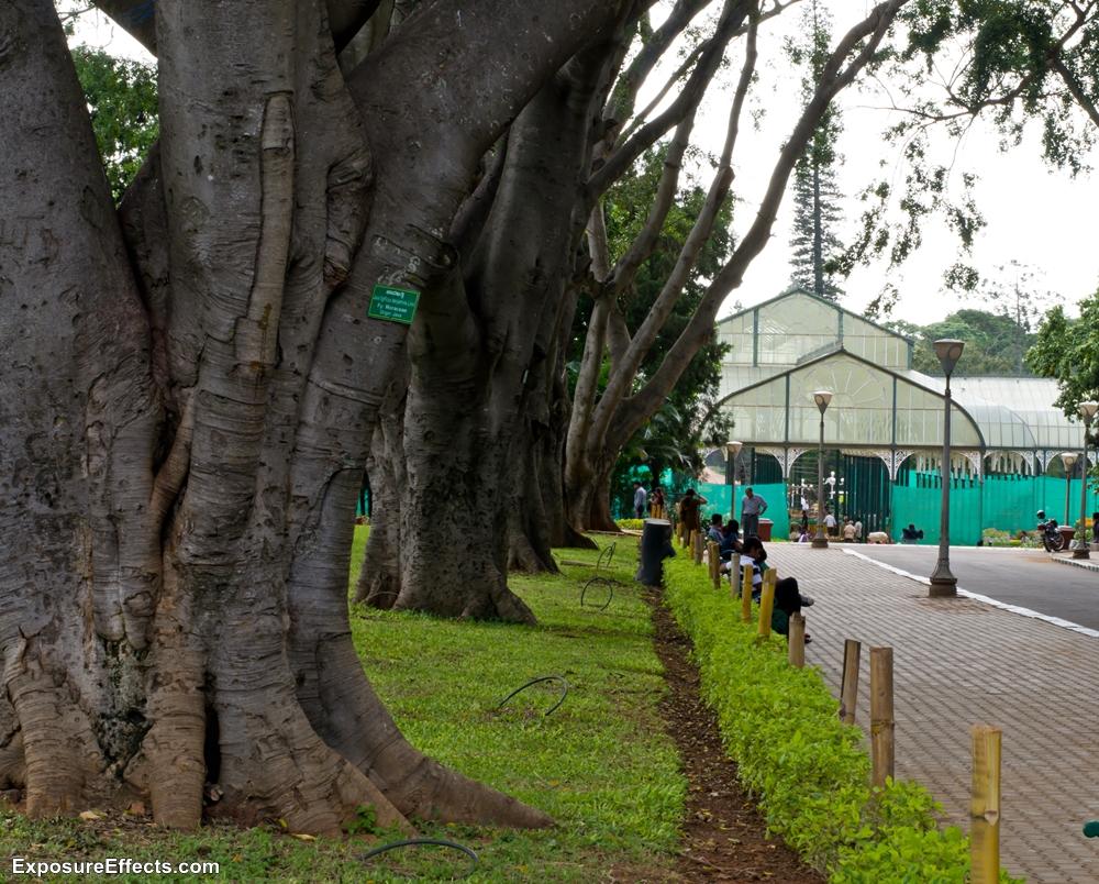 Lalbagh Botanical Garden -Glass house Bangalore