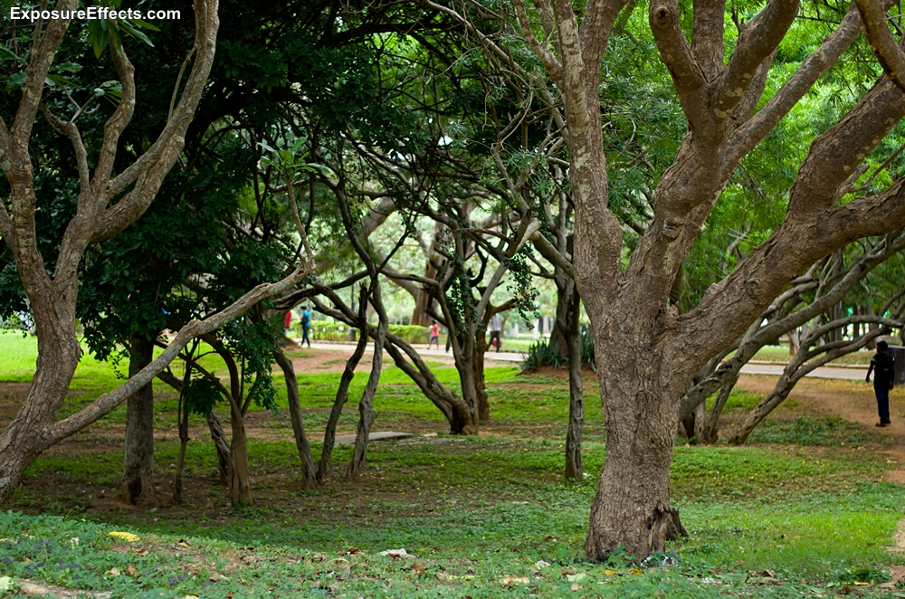 Lalbagh Botanical Garden Pictures in Bangalore