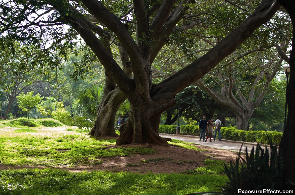 Lalbagh Botanical Garden Pictures