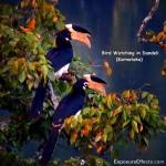 Birds in Dandeli – Karnataka