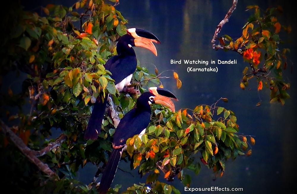 Bird Watching in Dandeli Ganeshgudi Karnataka