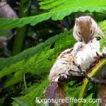 Rare Squirrel Behaviour