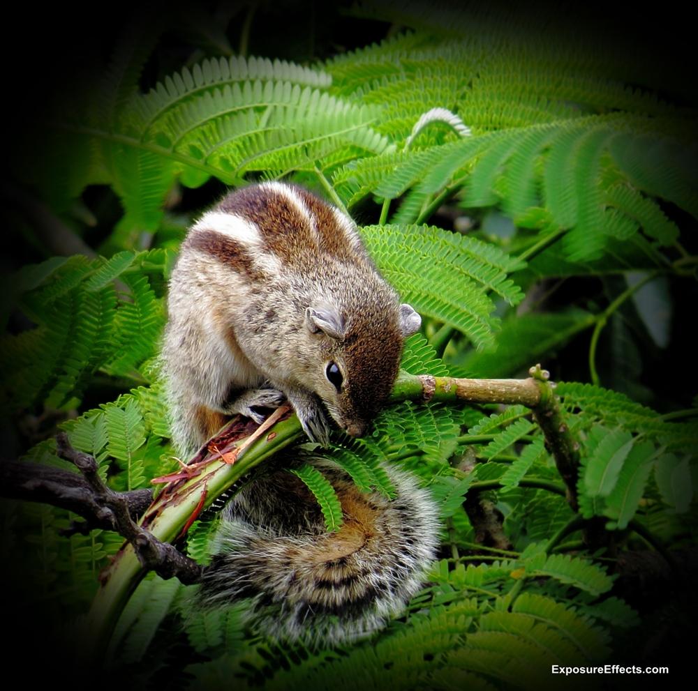 Rare and Unseen Squirrel Behaviour