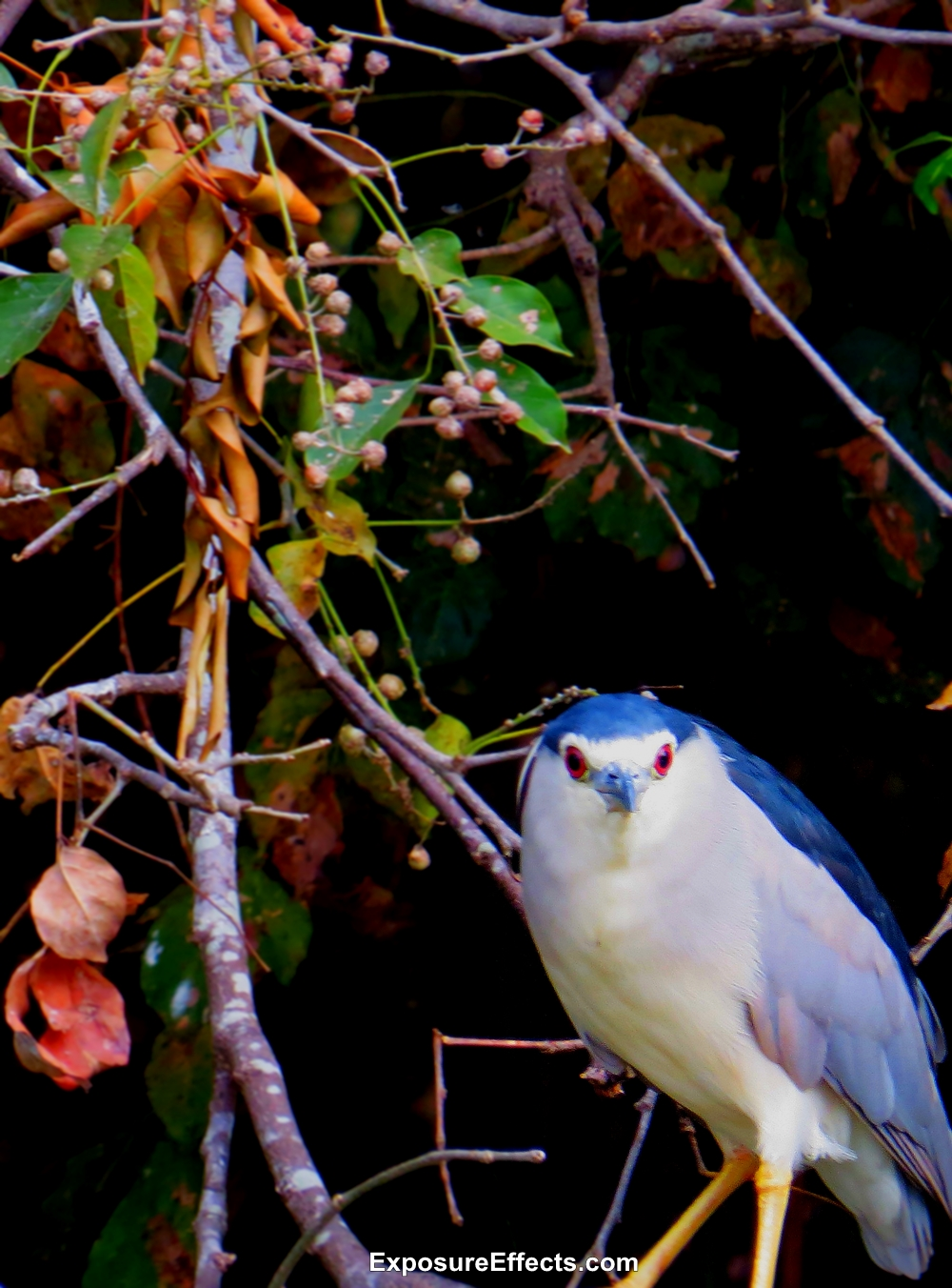 Ranganathittu Bird Sanctuary - Karnataka India