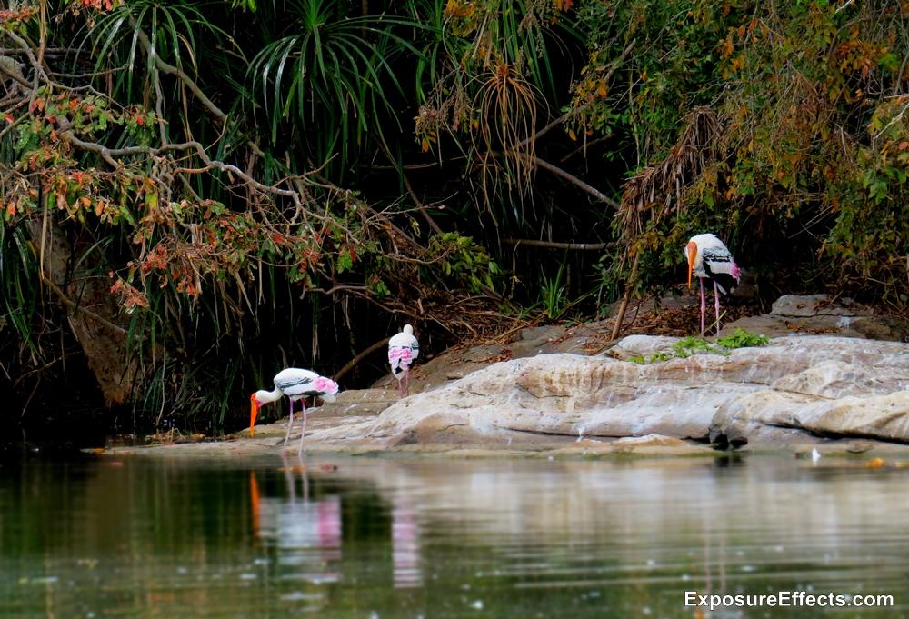 Ranganathittu Bird Sanctuary - Karnataka Pictures