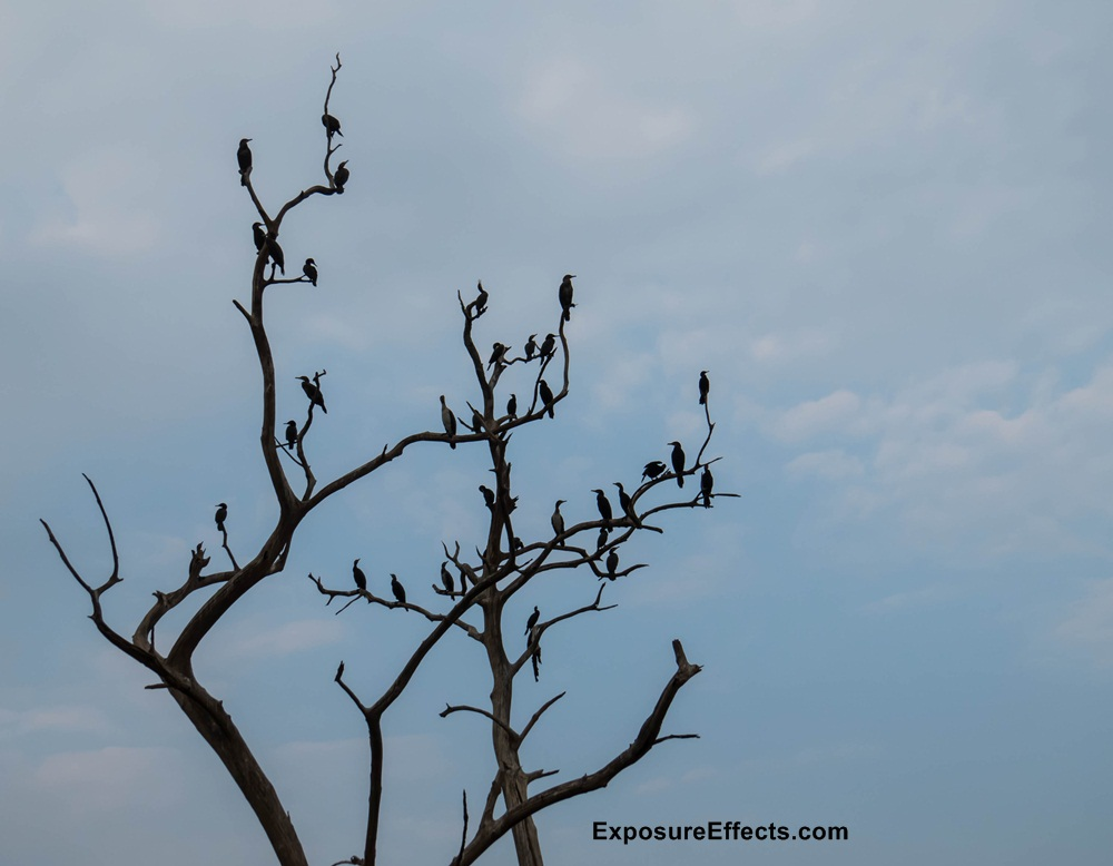 Birds Spotted during Boat Safari Jungle Lodges River Tern