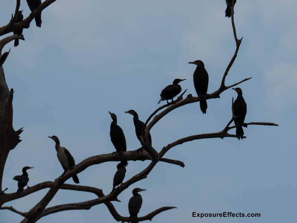 Birds Spotted during Boat Safari