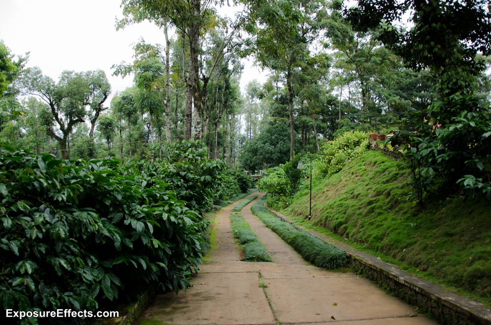 Coorg Resorts Misty Woods Pictures