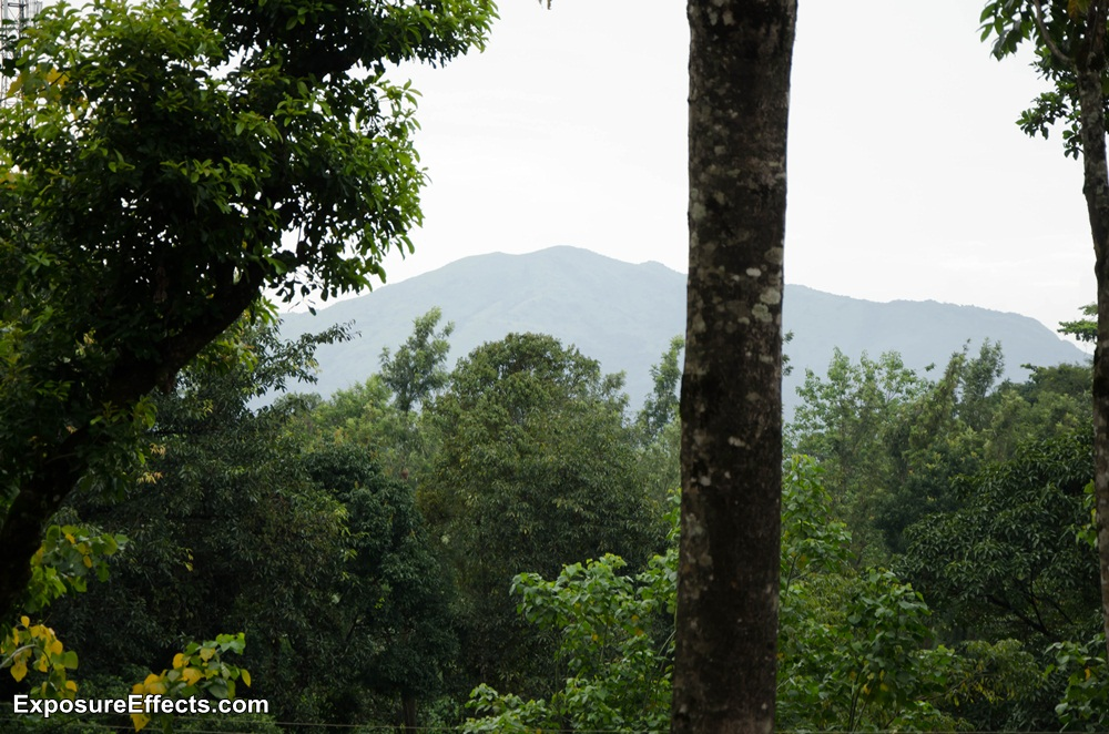 Misty Woods Coorg Pictures