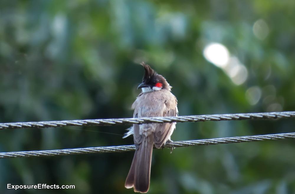 Misty Woods Coorg Resort Birds