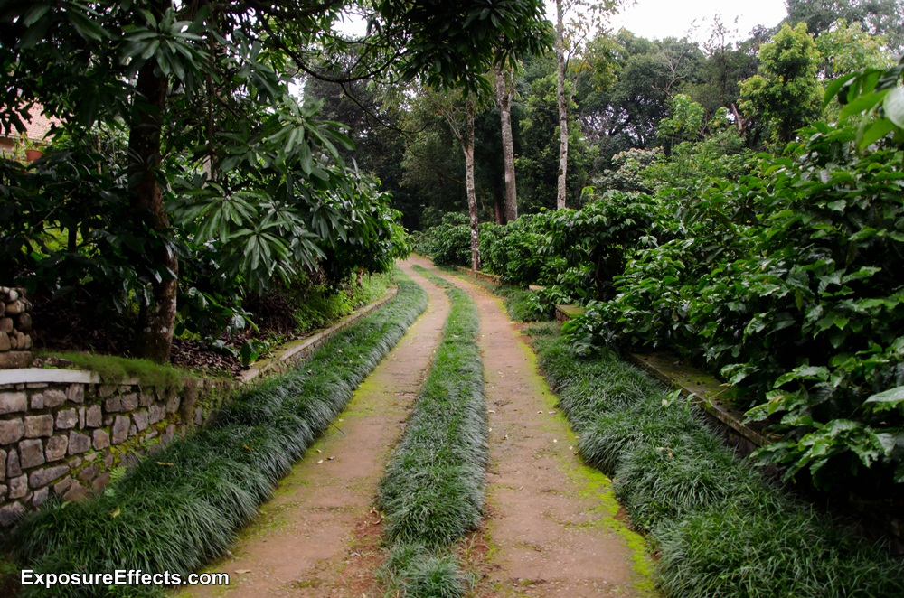 Misty Woods Coorg Resorts Pictures Passage to Cottages
