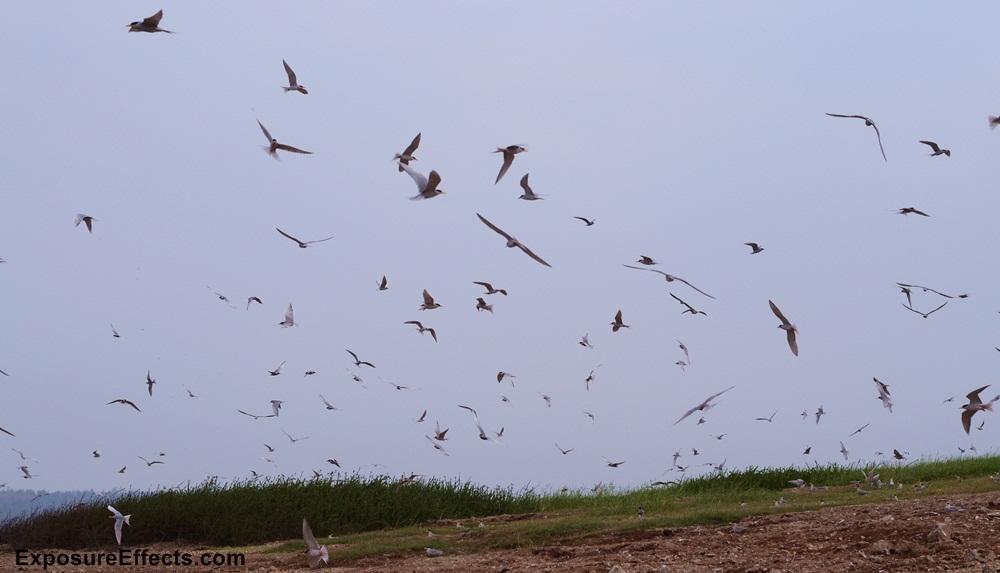 River Tern Birds at River Tern Jungle Lodges and Resorts