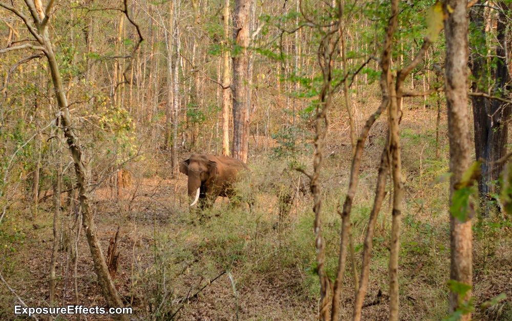 River Tern Lodge Jungle Lodges and Resorts Wildlife Jeep Safari