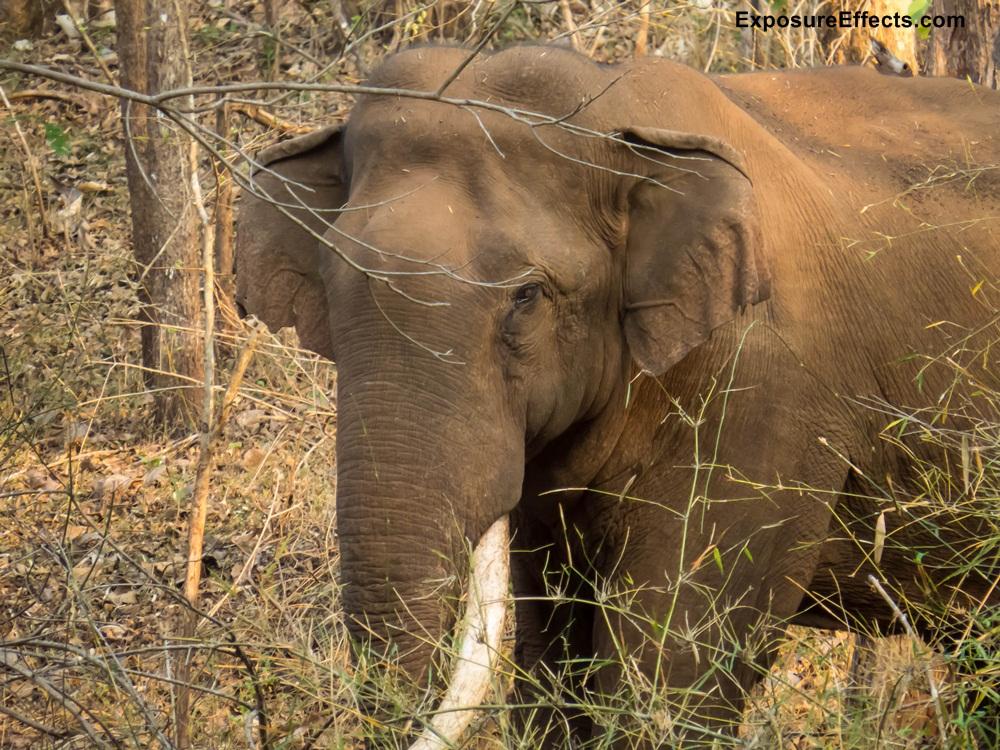 Wildlife Jeep Safari Karnataka