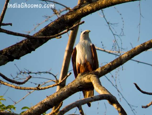 Sharavathi Adventure Camp - Birds spotted during Kayaking
