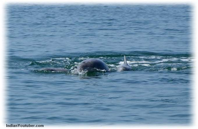 Watching Dolphins Devbagh Beach Resort Jungle Lodges
