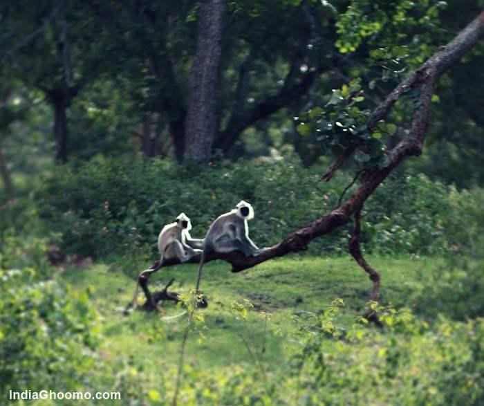 Bandipur Safari Lodge - Jungle Lodges