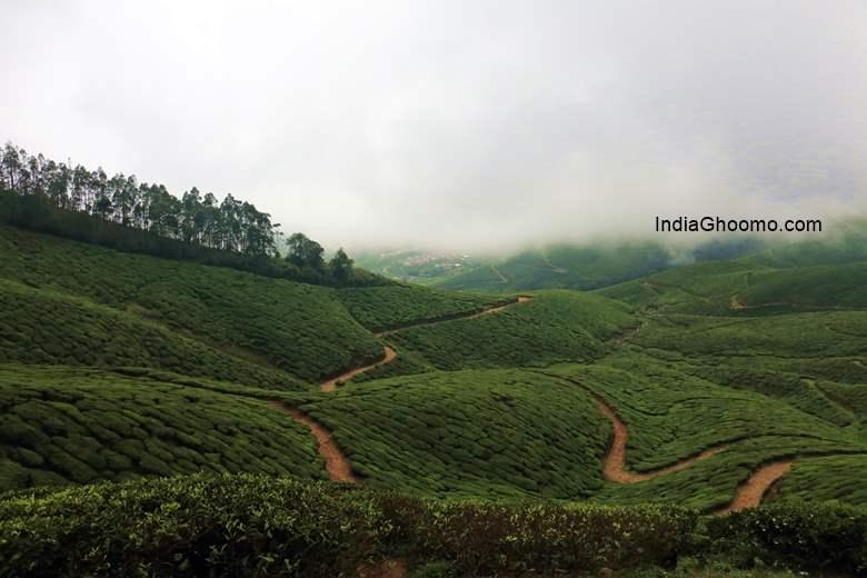 Kolukkumalai Tea Gardens Munnar