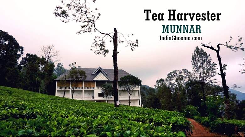 Munnar - Tea Harvester REVIEW