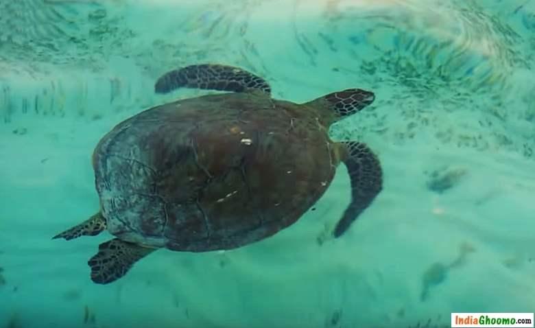 Lakshadweep – Thinnakara Turtle watching