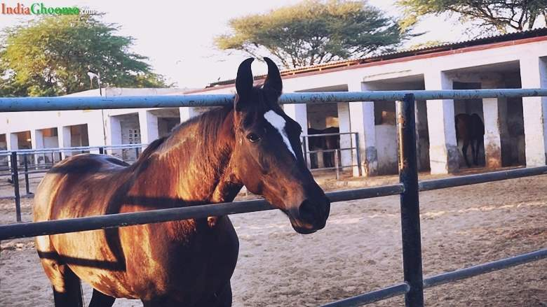 Bikaner National Research Centre on Equines Rajasthan