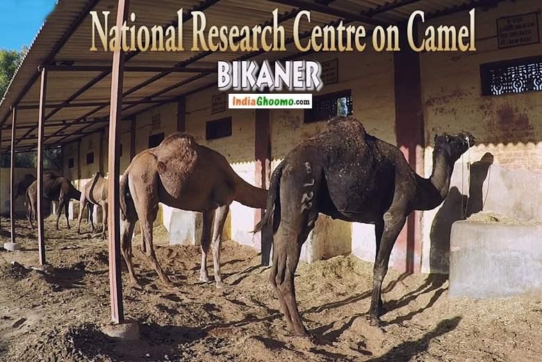 National Research Centre on Camel Bikaner