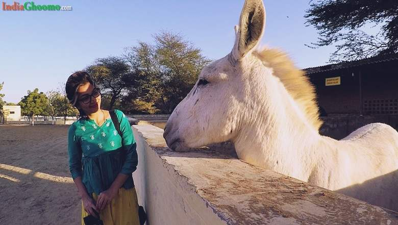National Research Centre on Equines in Rajasthan Bikaner