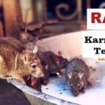 Mysterious Karni Mata Temple in Bikaner – Rajasthan | Rat Temple