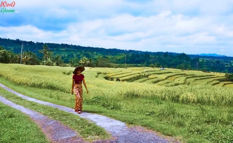 Bali Jatiluwih Rice Terraces Trekking