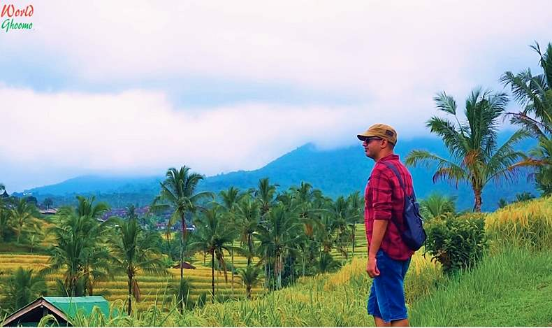 Bali Rice Terraces views