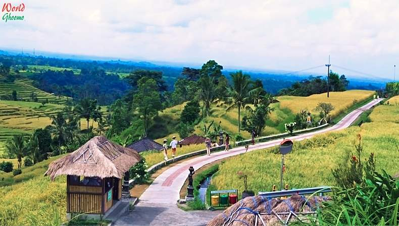 Jatiluwih Rice Terraces Bali Trekking