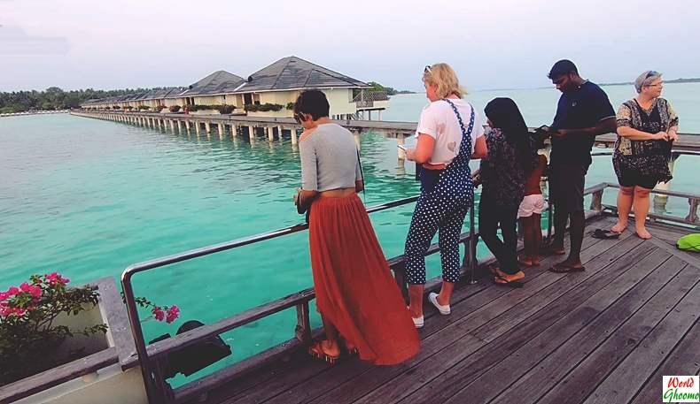 Maldives Shark Feeding Sun Island resort