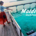 Maldives - Shark Feeding at Sun Island Resort Spa