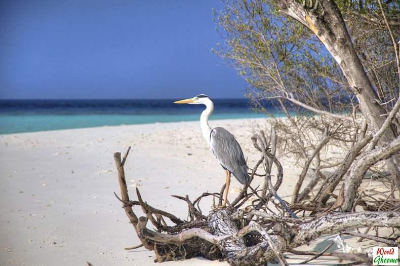 Maldives sightings